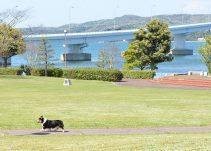 撮影当日はお天気にも恵まれ、芝生の緑と能登の海がとてもキレイでした。