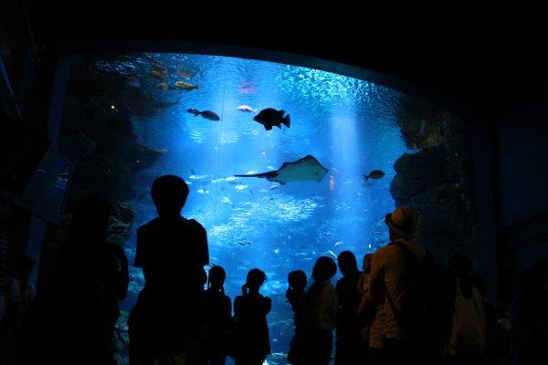 京都水族館巨大水槽