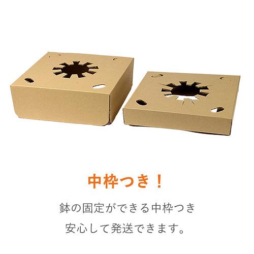 フラワーギフト 発送BOX(鉢押えセット)【宅配120サイズM】