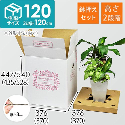 フラワーギフト 発送BOX(鉢押えセット)【宅配120サイズL】