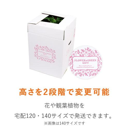 フラワーギフト 発送BOX(外箱のみ)【宅配120サイズL】
